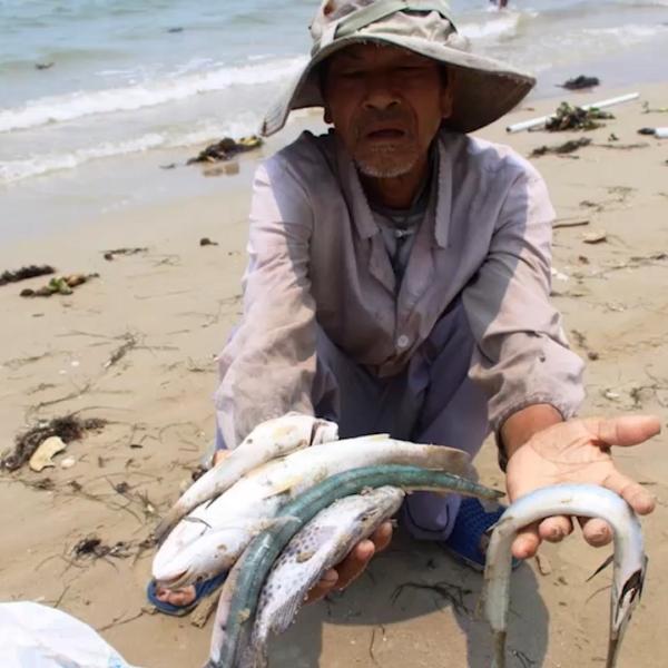 Ngư dân với thảm họa môi trường biển